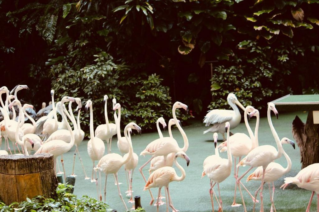 Jurong Bird Park ticket discount, promotion, deals.