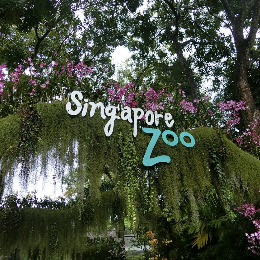Singapore Zoo tickets. Singapore zoo location & opening hours. Singapore Zoo